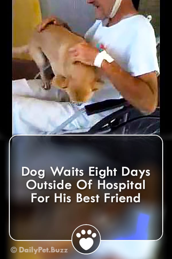 Dog Waits Eight Days Outside Of Hospital For His Best Friend