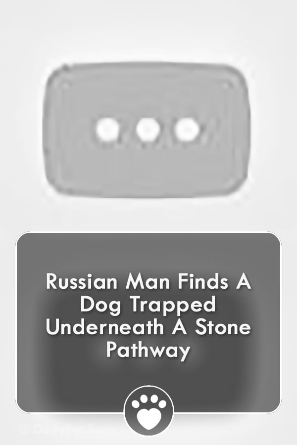 Russian Man Finds A Dog Trapped Underneath A Stone Pathway