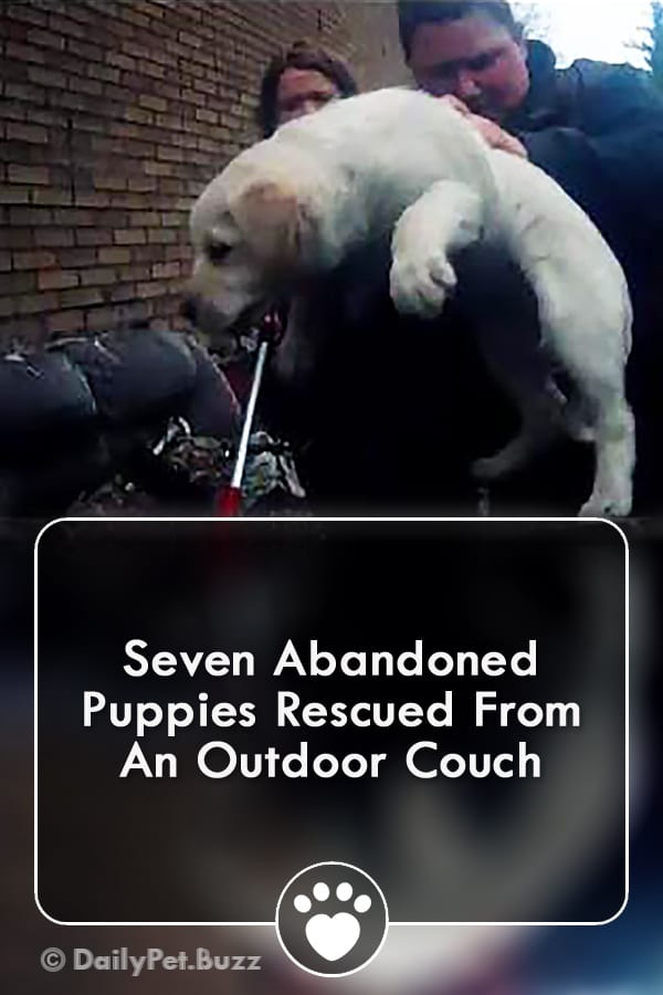 Seven Abandoned Puppies Rescued From An Outdoor Couch