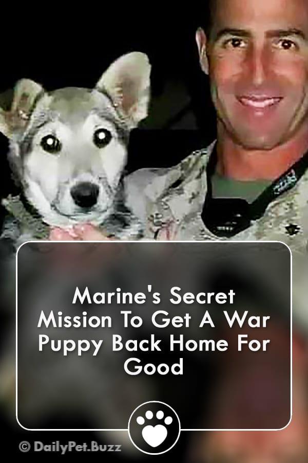 Marine\'s Secret Mission To Get A War Puppy Back Home For Good