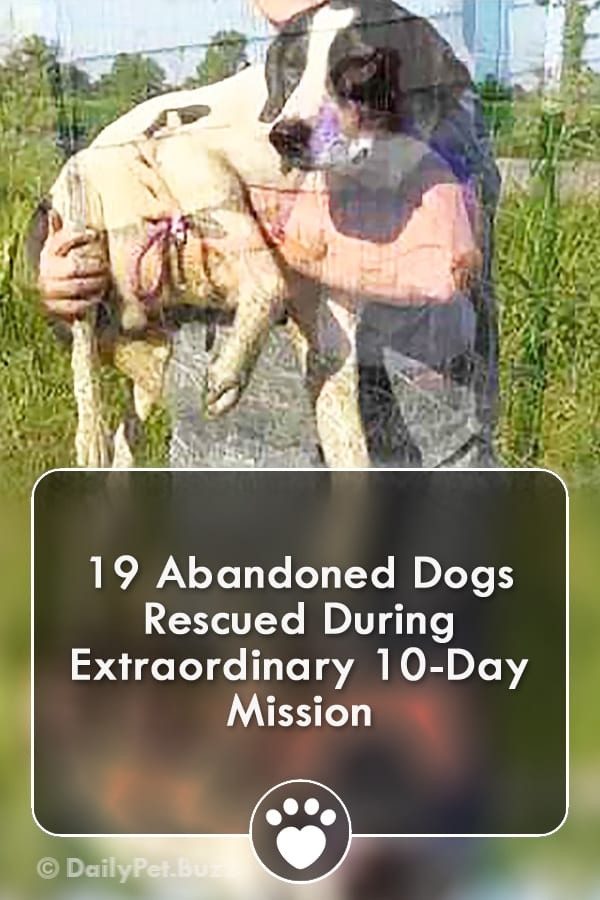 19 Abandoned Dogs Rescued During Extraordinary 10-Day Mission