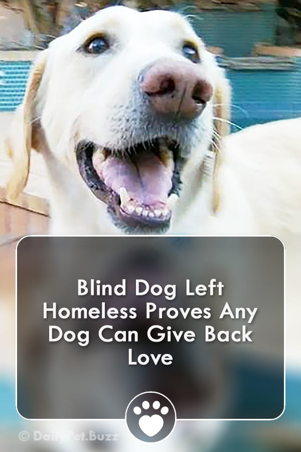 Blind Dog Left Homeless Proves Any Dog Can Give Back Love