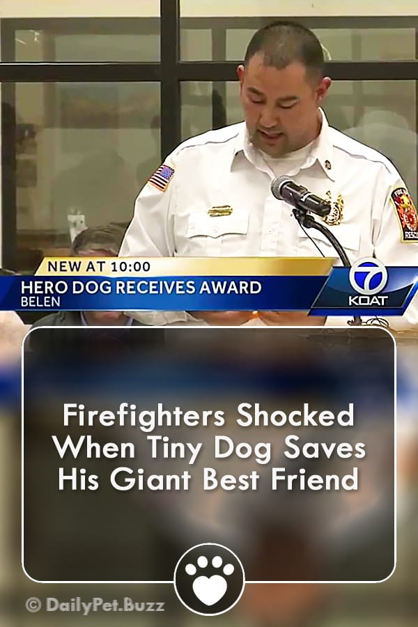 Firefighters Shocked When Tiny Dog Saves His Giant Best Friend