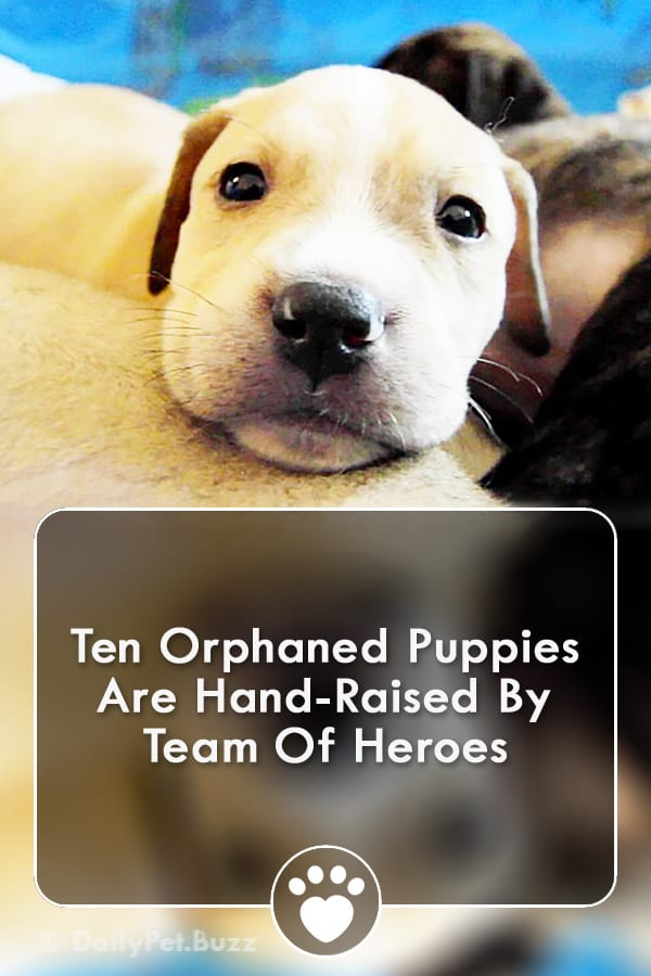 Ten Orphaned Puppies Are Hand-Raised By Team Of Heroes