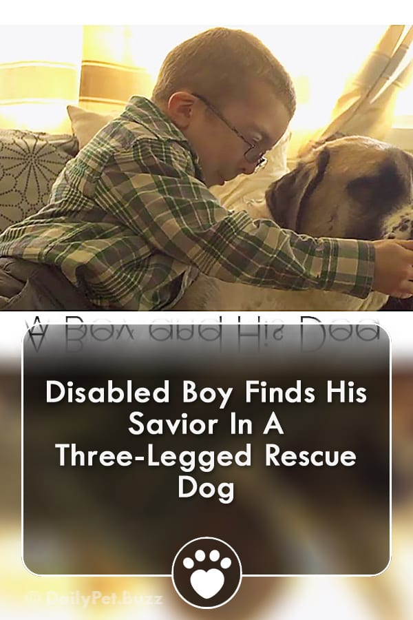 Disabled Boy Finds His Savior In A Three-Legged Rescue Dog