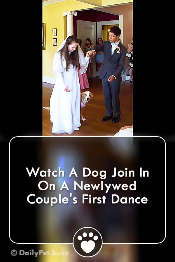Watch A Dog Join In On A Newlywed Couple\'s First Dance