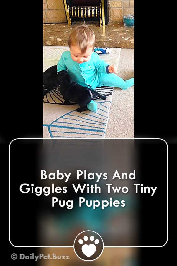 Baby Plays And Giggles With Two Tiny Pug Puppies