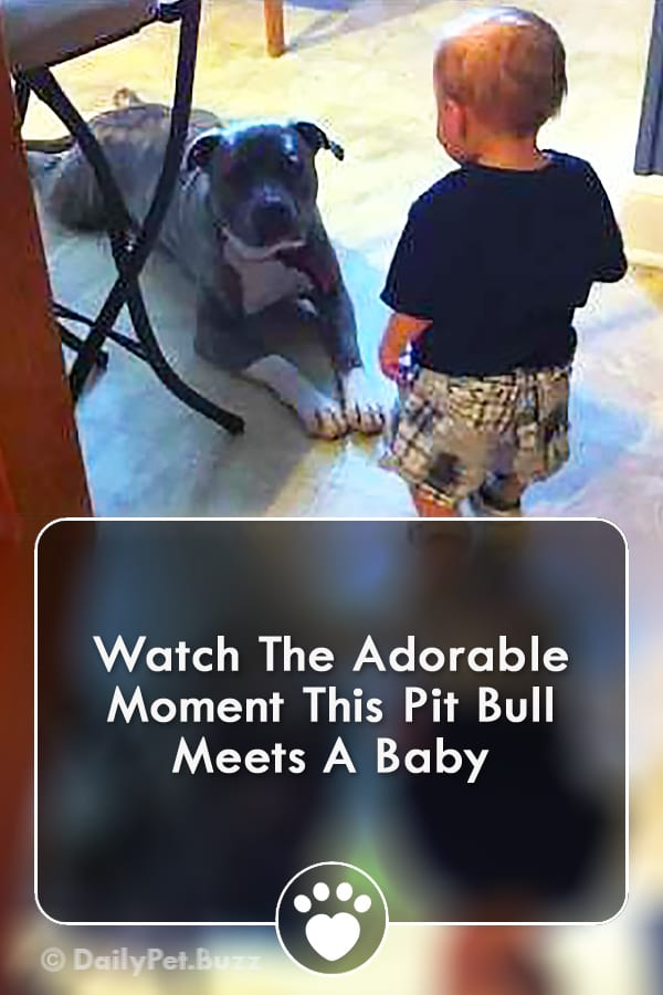 Watch The Adorable Moment This Pit Bull Meets A Baby