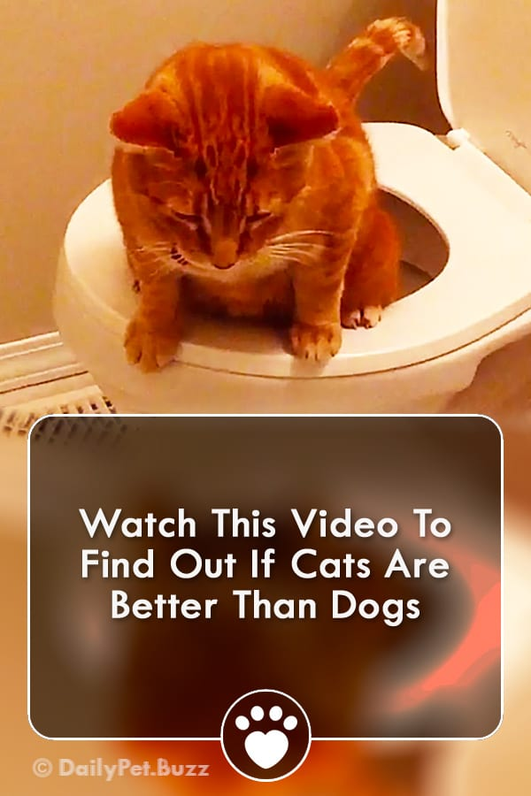 Watch This Video To Find Out If Cats Are Better Than Dogs