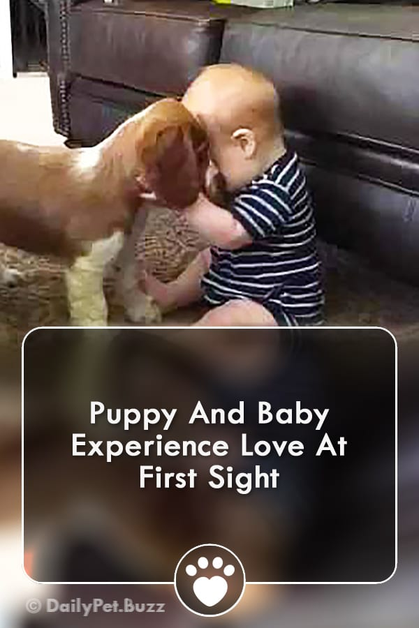 Puppy And Baby Experience Love At First Sight