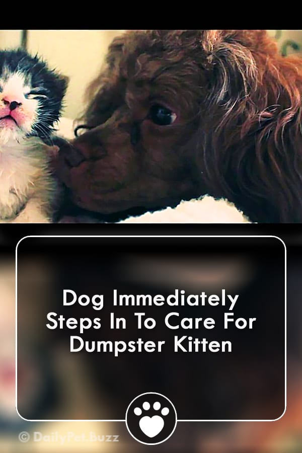 Dog Immediately Steps In To Care For Dumpster Kitten