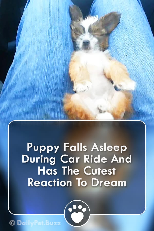 Puppy Falls Asleep During Car Ride And Has The Cutest Reaction To Dream