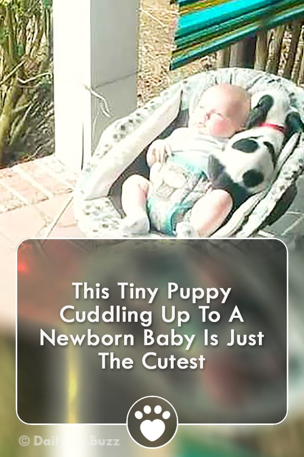 This Tiny Puppy Cuddling Up To A Newborn Baby Is Just The Cutest