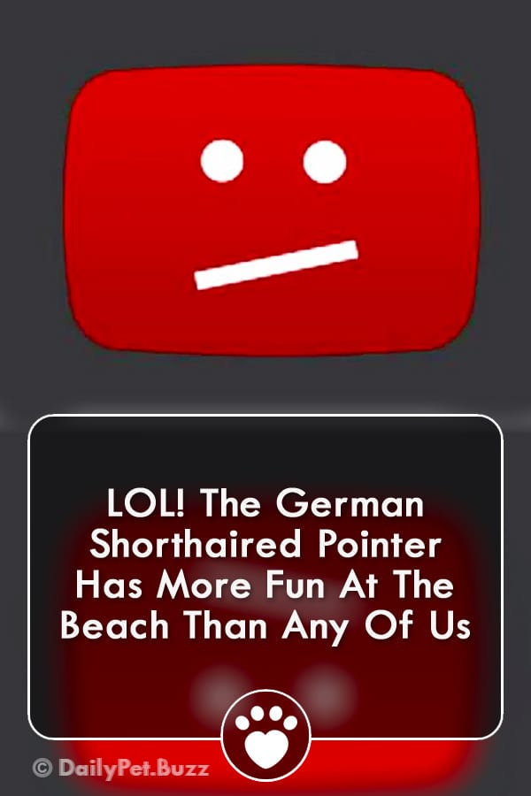 LOL! The German Shorthaired Pointer Has More Fun At The Beach Than Any Of Us