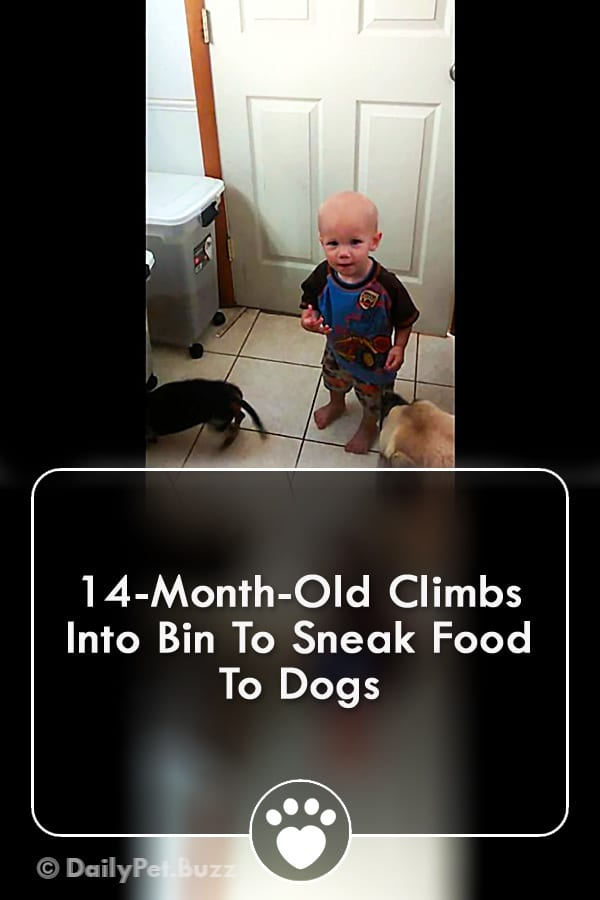 14-Month-Old Climbs Into Bin To Sneak Food To Dogs