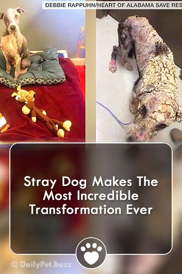Stray Dog Makes The Most Incredible Transformation Ever