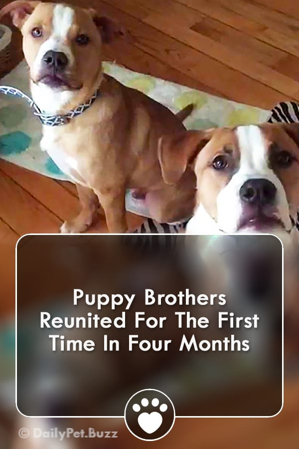 Puppy Brothers Reunited For The First Time In Four Months