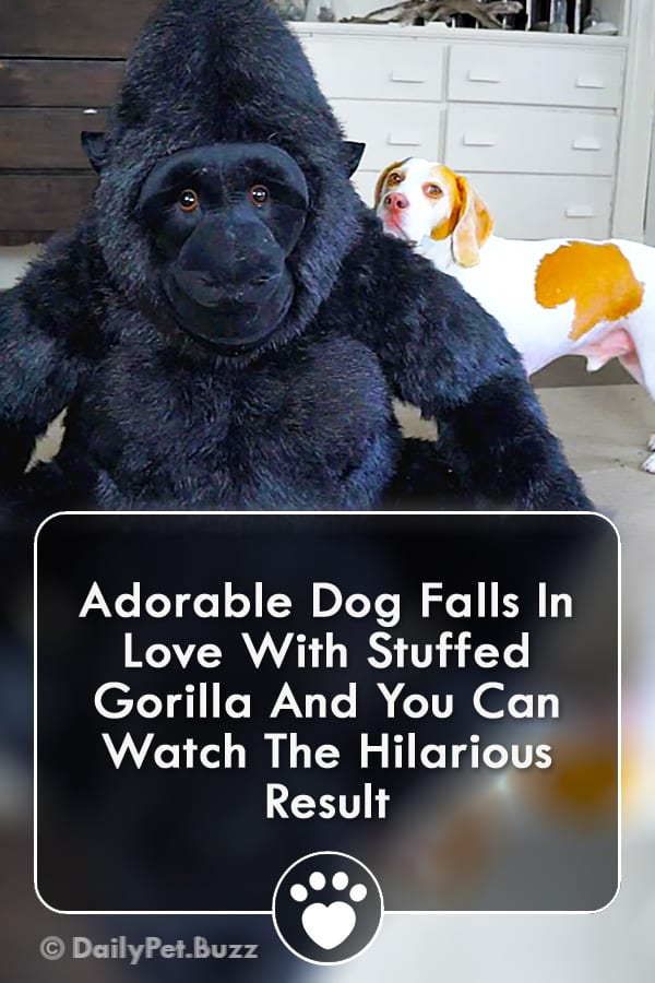 Adorable Dog Falls In Love With Stuffed Gorilla And You Can Watch The Hilarious Result