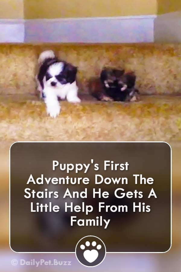 Puppy\'s First Adventure Down The Stairs And He Gets A Little Help From His Family