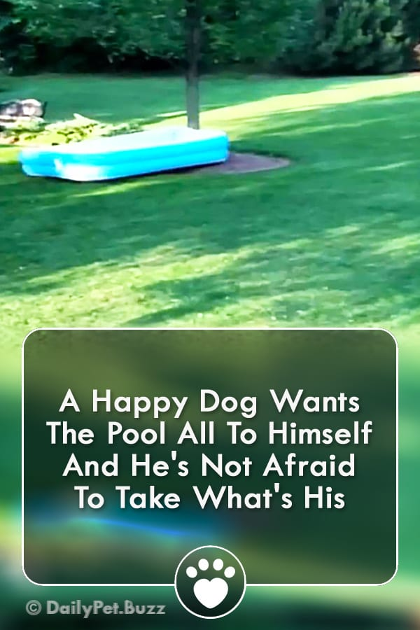 A Happy Dog Wants The Pool All To Himself And He\'s Not Afraid To Take What\'s His