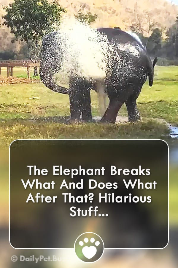 The Elephant Breaks What And Does What After That? Hilarious Stuff...