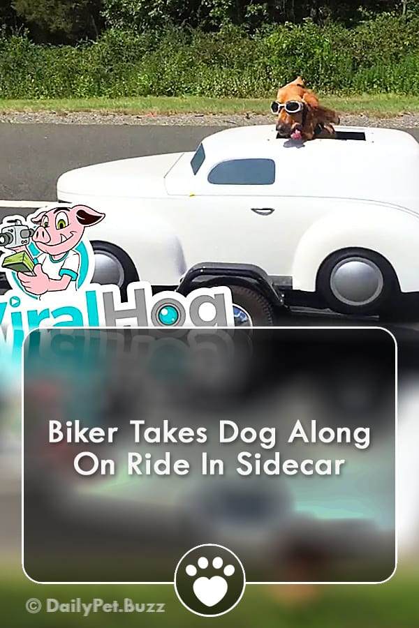 Biker Takes Dog Along On Ride In Sidecar