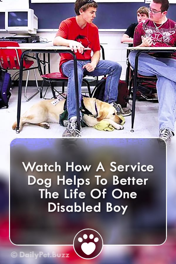 Watch How A Service Dog Helps To Better The Life Of One Disabled Boy