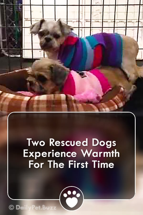 Two Rescued Dogs Experience Warmth For The First Time