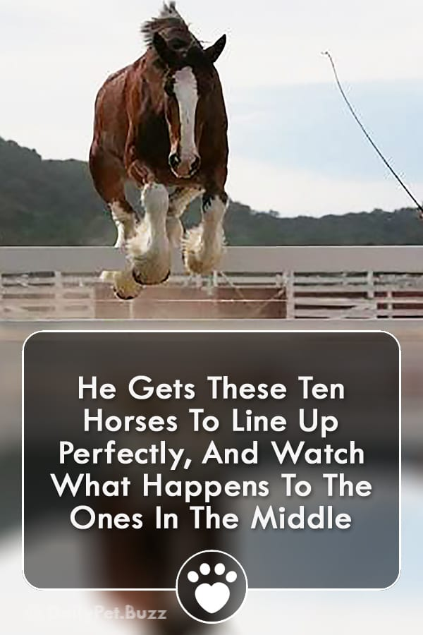 He Gets These Ten Horses To Line Up Perfectly, And Watch What Happens To The Ones In The Middle