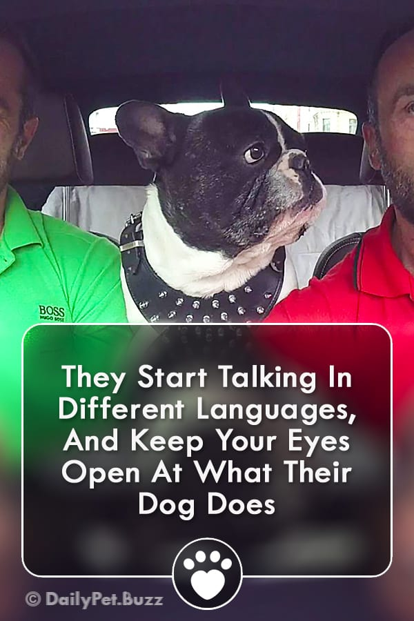 They Start Talking In Different Languages, And Keep Your Eyes Open At What Their Dog Does