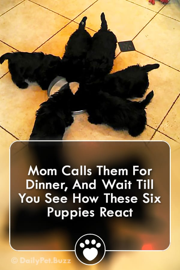 Mom Calls Them For Dinner, And Wait Till You See How These Six Puppies React