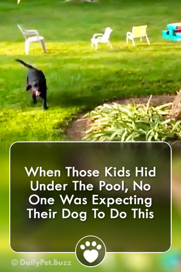 When Those Kids Hid Under The Pool, No One Was Expecting Their Dog To Do This