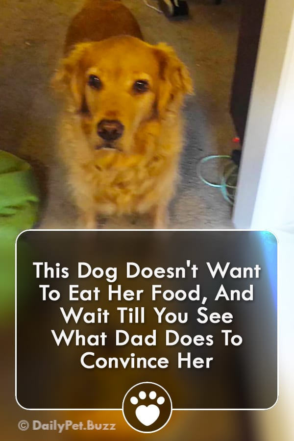 This Dog Doesn\'t Want To Eat Her Food, And Wait Till You See What Dad Does To Convince Her