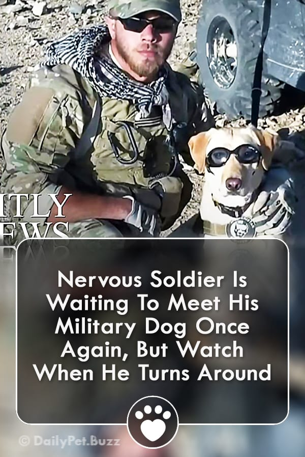 Nervous Soldier Is Waiting To Meet His Military Dog Once Again, But Watch When He Turns Around