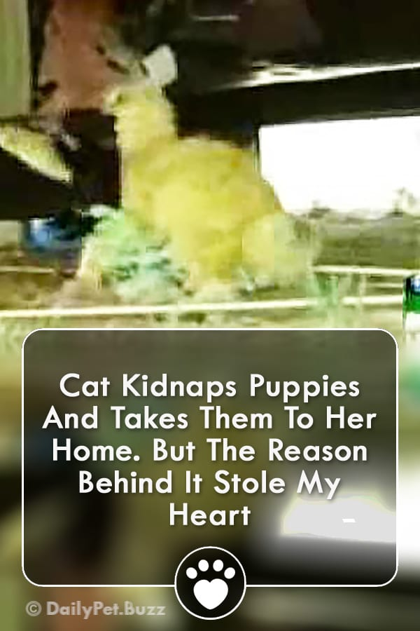 Cat Kidnaps Puppies And Takes Them To Her Home. But The Reason Behind It Stole My Heart