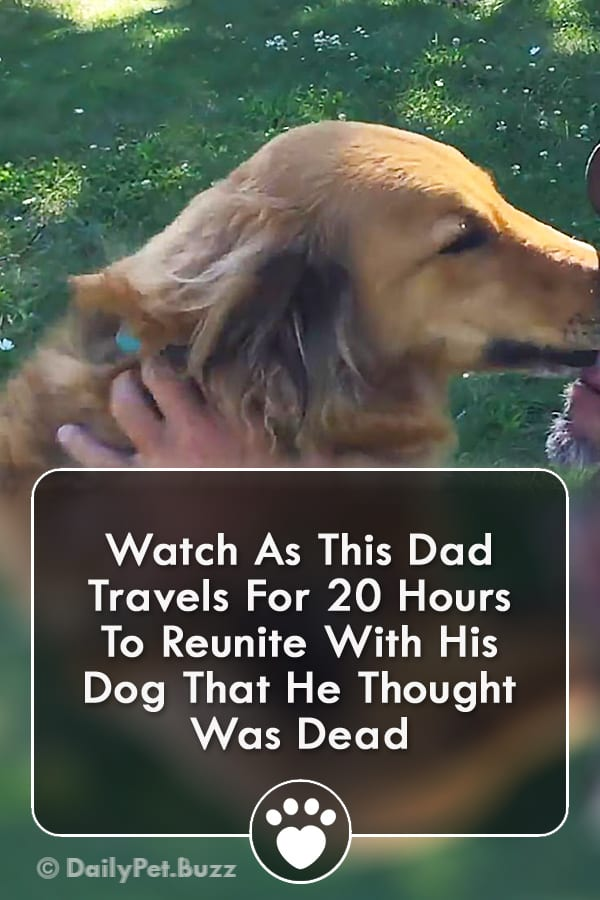Watch As This Dad Travels For 20 Hours To Reunite With His Dog That He Thought Was Dead