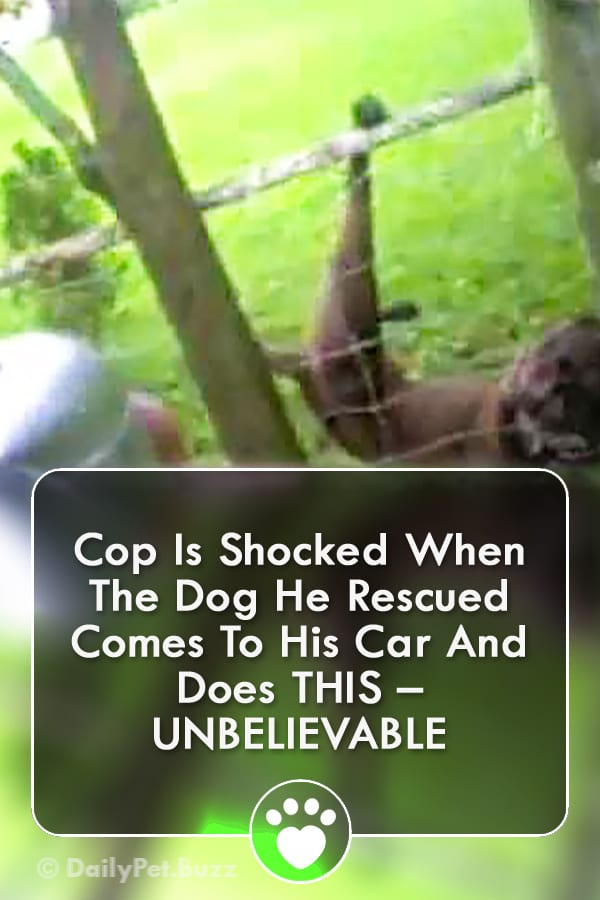 Cop Is Shocked When The Dog He Rescued Comes To His Car And Does THIS – UNBELIEVABLE