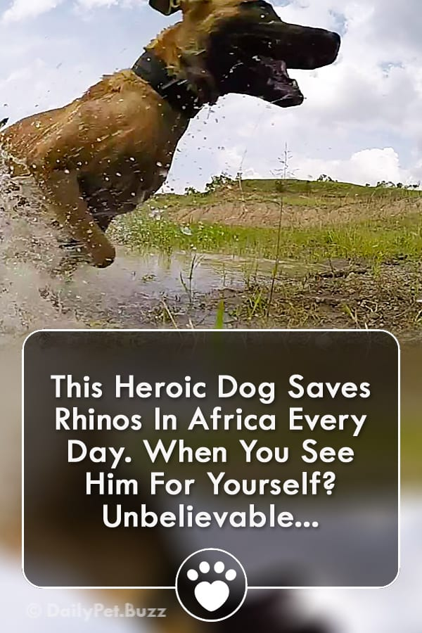 This Heroic Dog Saves Rhinos In Africa Every Day. When You See Him For Yourself? Unbelievable...