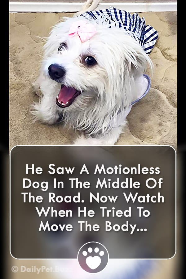 He Saw A Motionless Dog In The Middle Of The Road. Now Watch When He Tried To Move The Body...