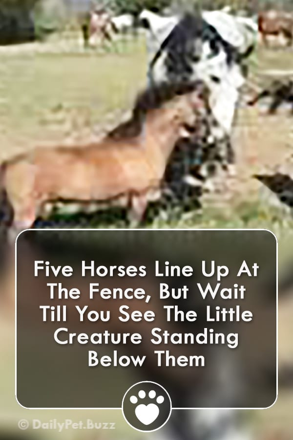 Five Horses Line Up At The Fence, But Wait Till You See The Little Creature Standing Below Them