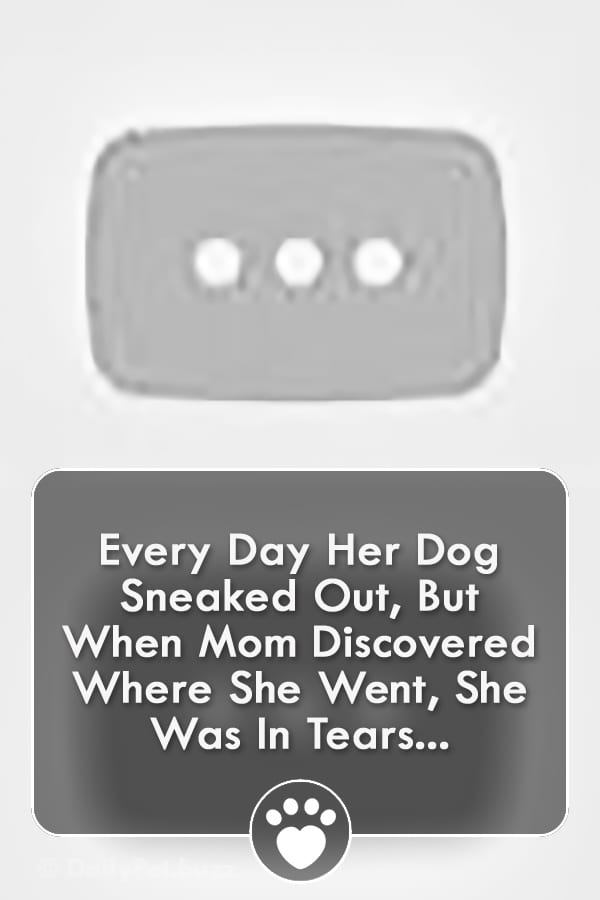 Every Day Her Dog Sneaked Out, But When Mom Discovered Where She Went, She Was In Tears...
