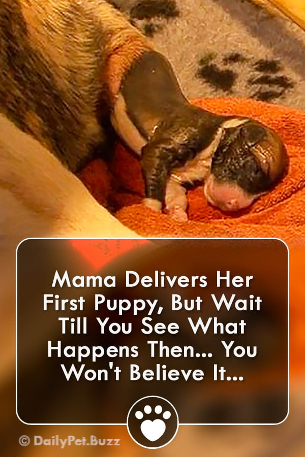 Mama Delivers Her First Puppy, But Wait Till You See What Happens Then... You Won\'t Believe It...