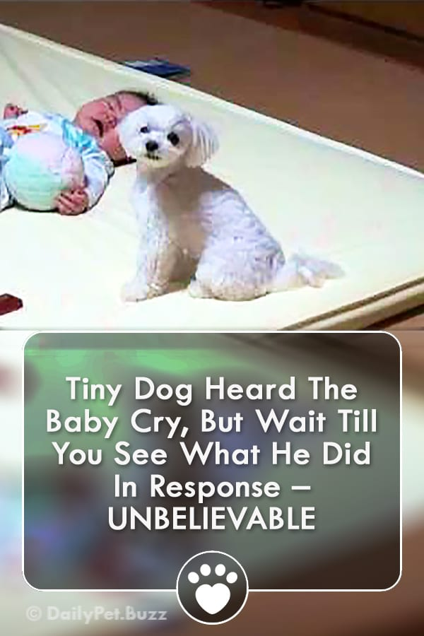 Tiny Dog Heard The Baby Cry, But Wait Till You See What He Did In Response – UNBELIEVABLE