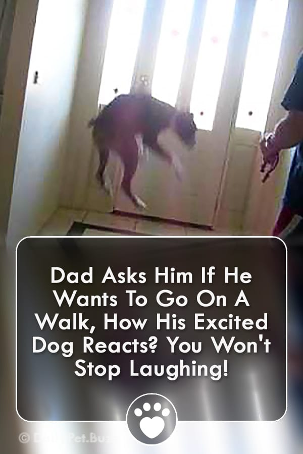 Dad Asks Him If He Wants To Go On A Walk, How His Excited Dog Reacts? You Won\'t Stop Laughing!