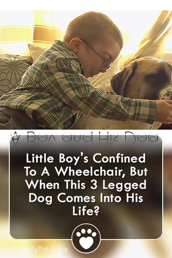 Little Boy\'s Confined To A Wheelchair, But When This 3 Legged Dog Comes Into His Life?