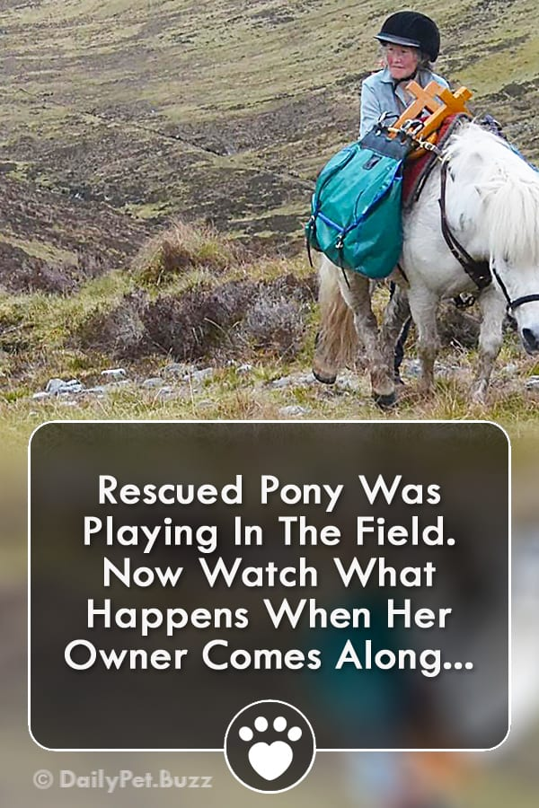 Rescued Pony Was Playing In The Field. Now Watch What Happens When Her Owner Comes Along...