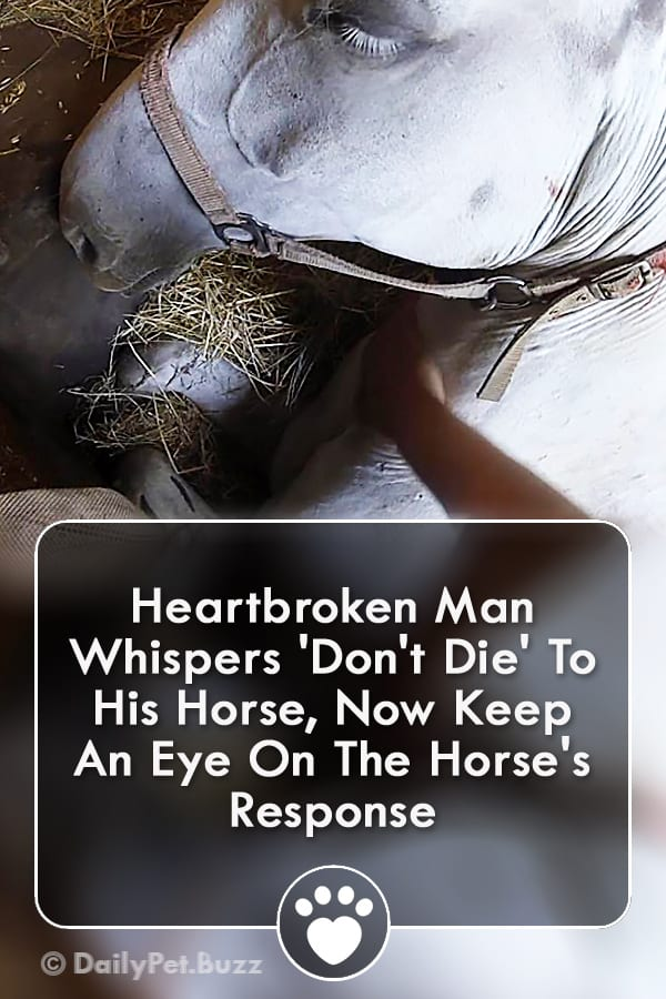 Heartbroken Man Whispers \'Don\'t Die\' To His Horse, Now Keep An Eye On The Horse\'s Response