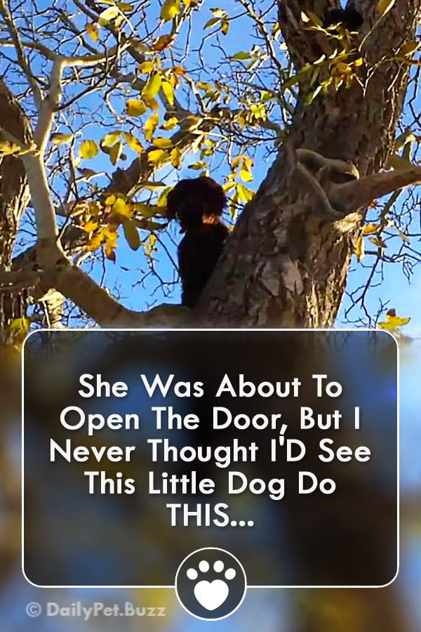 She Was About To Open The Door, But I Never Thought I\'D See This Little Dog Do THIS...