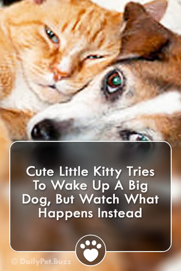 Cute Little Kitty Tries To Wake Up A Big Dog, But Watch What Happens Instead
