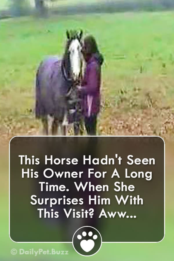 This Horse Hadn\'t Seen His Owner For A Long Time. When She Surprises Him With This Visit? Aww...